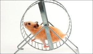 Hamster-wheel (1)