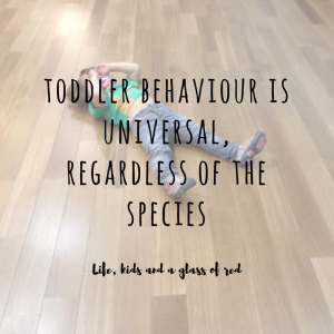 toddler-behaviour-is-universal-regardless-of-the-species